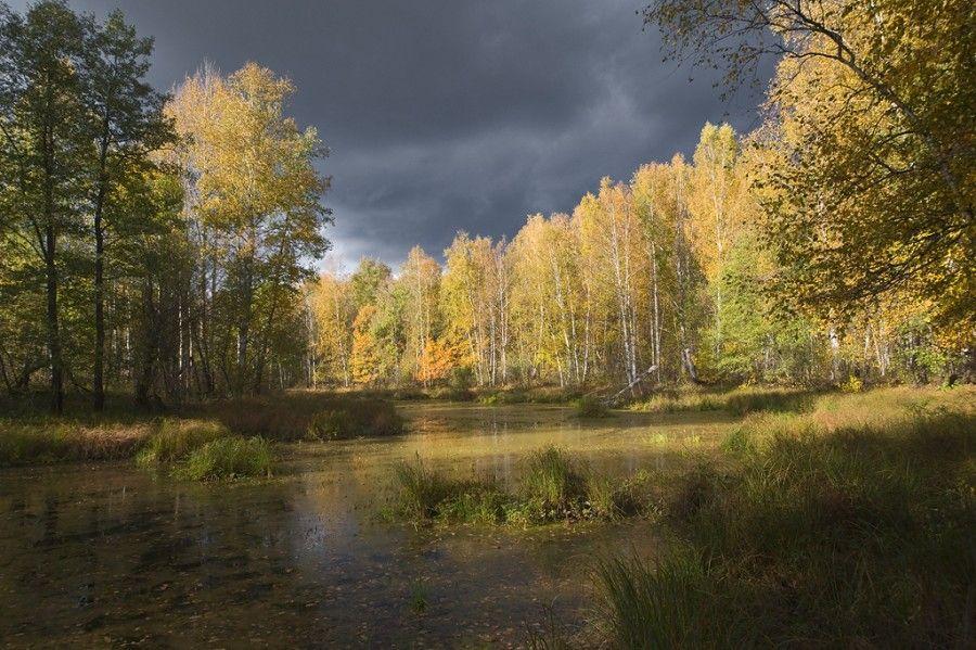 Картинка плещеев осень наступила