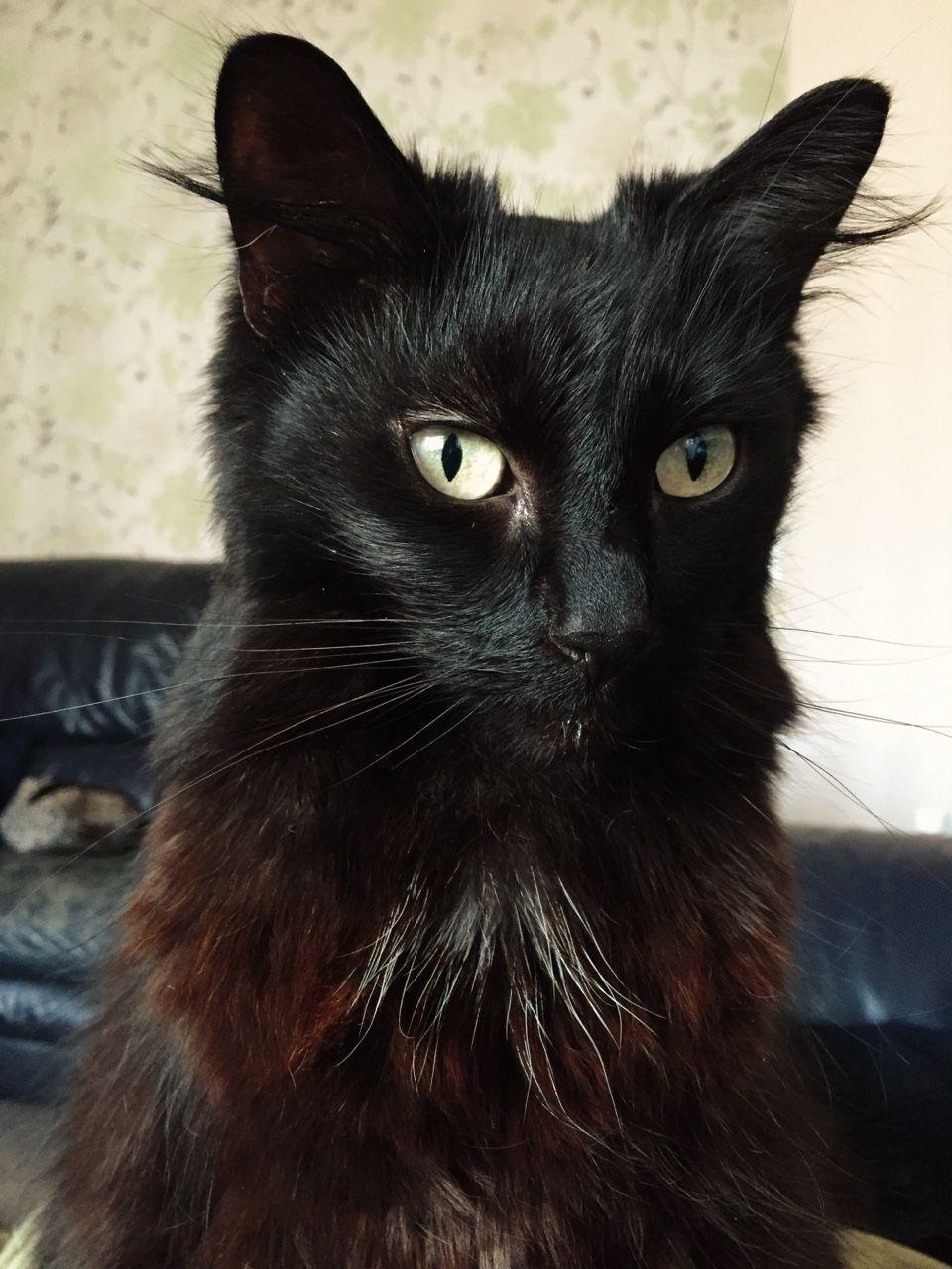 gayfrey: Meu gato é af fotogênico Eu amo a minha ...