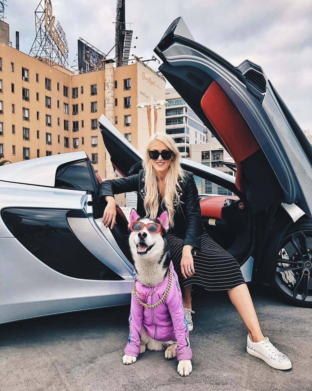 This Husky Has More Swag Than I Ever Will Swagrman Super Cars Car Girls Futuristic Cars