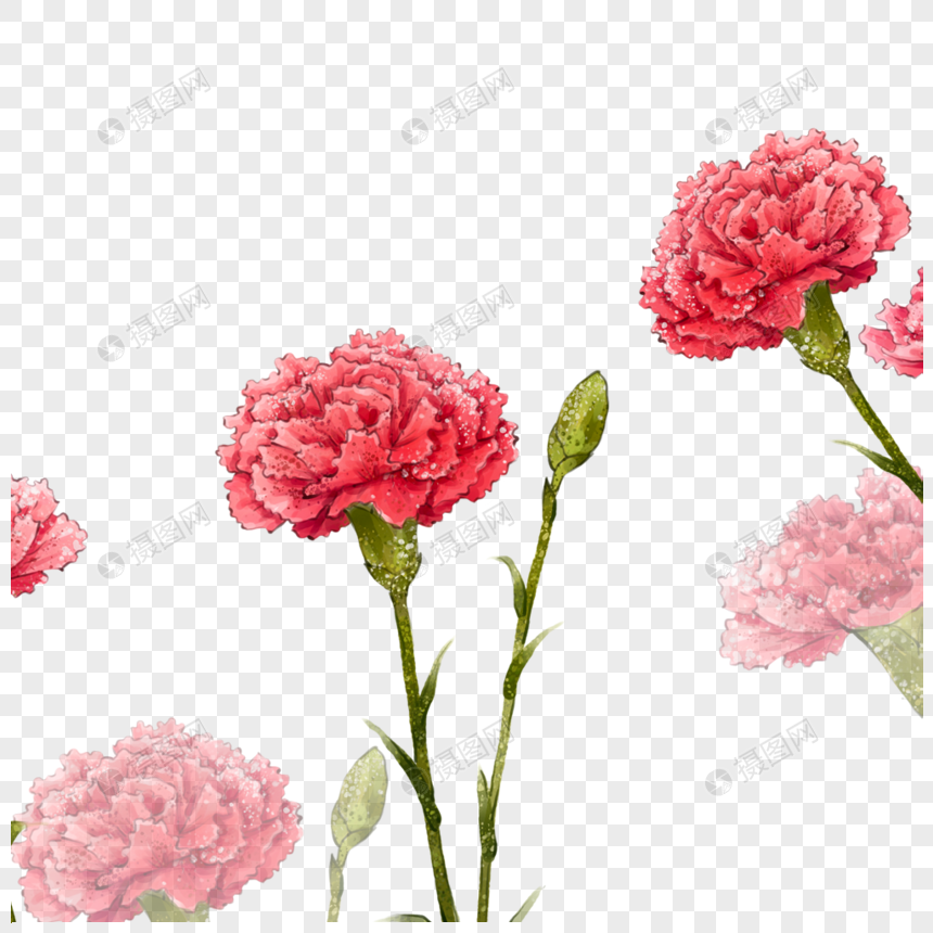 Carnation Carnations Mother S Day Flowers Plants Petals Flowers Carnations Pictures Web App Design Carnations Carnation Flower