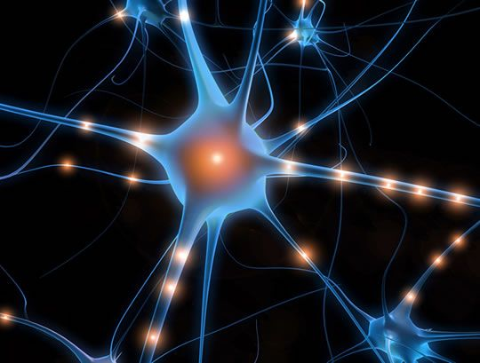 Adults can still grow new brain cells -- neurogenesis -- but what are they for?