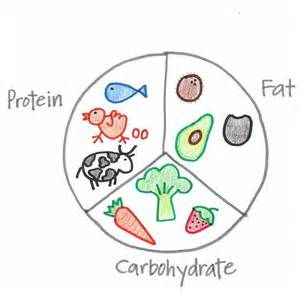 protein carbs fats image - - Yahoo Image Search Results