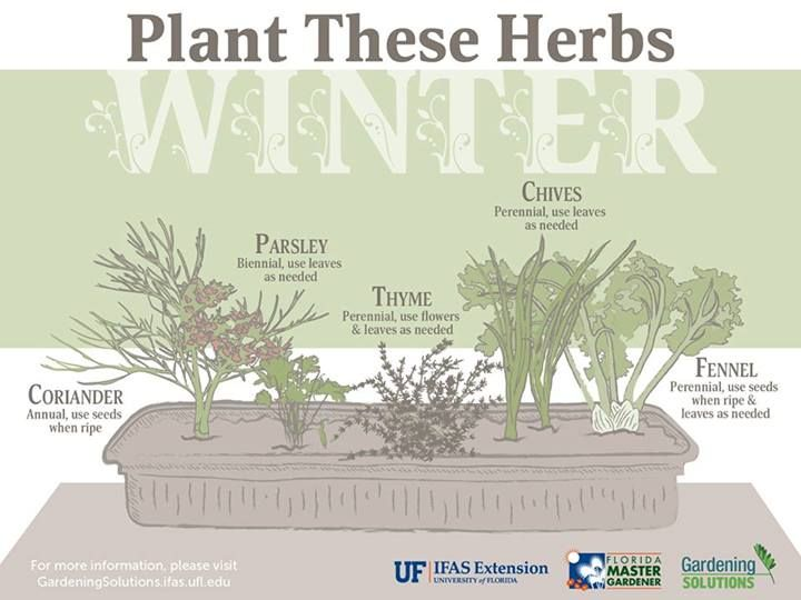 Ever Wondered What Herbs You Can Grow In The Winter