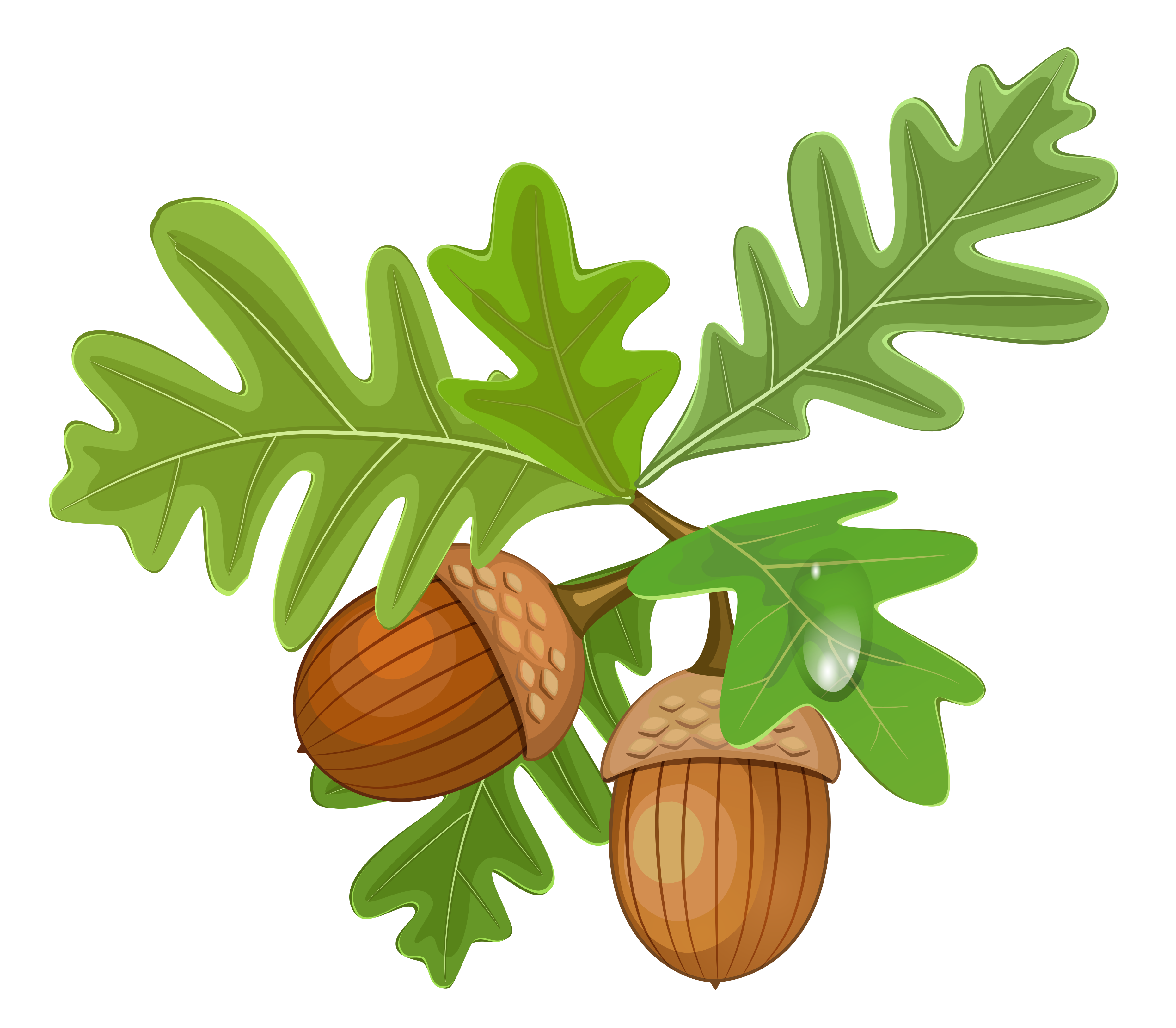 Pin by Next on Clipart Acorn image, Acorn, Clip art