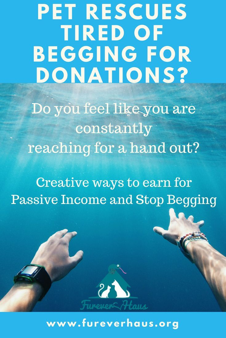 Pet Rescues are you tired of the daily begging for donations for supplies, care etc for you non-profit rescue?  Here are three great ideas to help you create passive income and grow your membership.  #rescue #pets #nonprofit #dog #cat #seniorpets #seniordog #seniorcat #rescueanimals #animalrescue