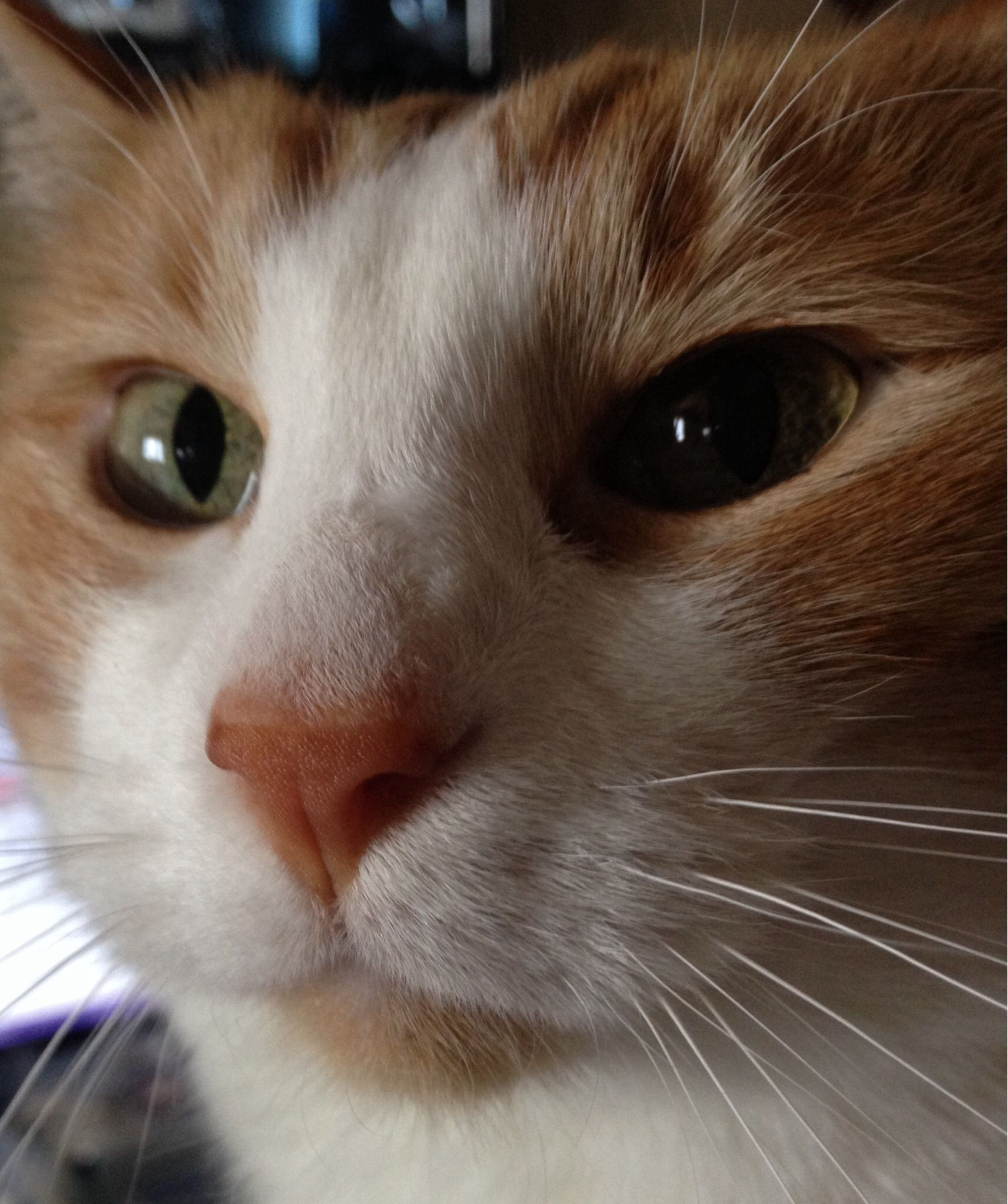 Pretty Boy Orange Cats Cats Cat Face