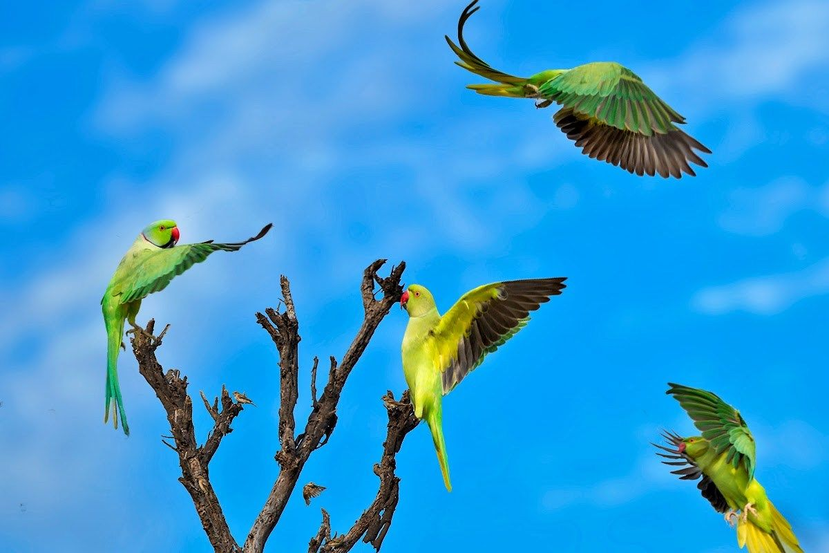 3 Parrots On Tree Download Hd Desktop Mobile Wallpaper And Background Images From Mukesh Garg Unlimited Focu Digital Art Photography Tree Hd Wallpaper Fine Art