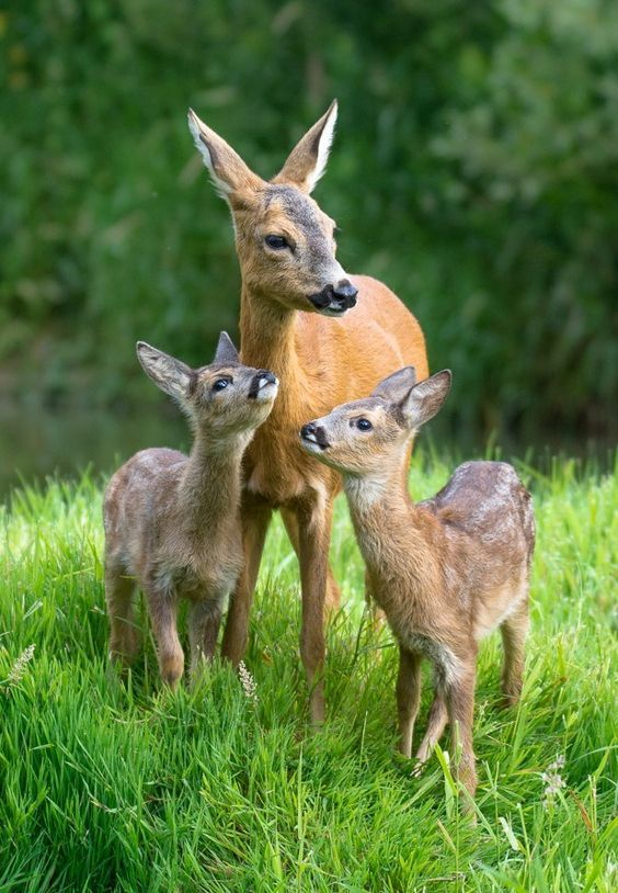 Love and affection  | mothers and babies | | wild life | #animals #wildlife  https://biopop.com/