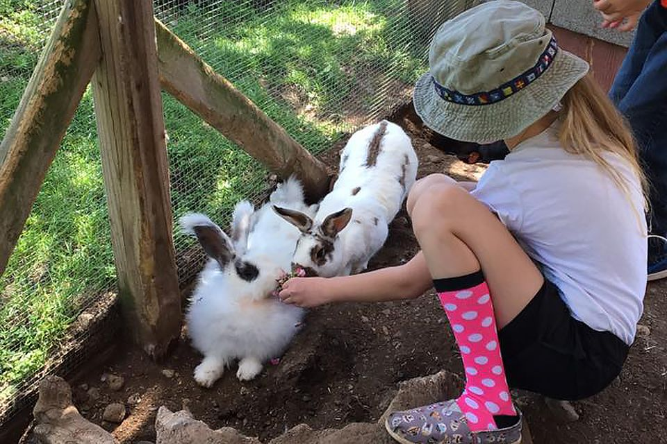Brookhollow's Barnyard A Sweet NJ Petting Zoo with the
