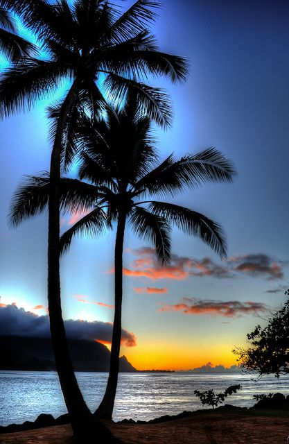 hdr sunset next to the palm trees on the beach at hanalei bay 絶景