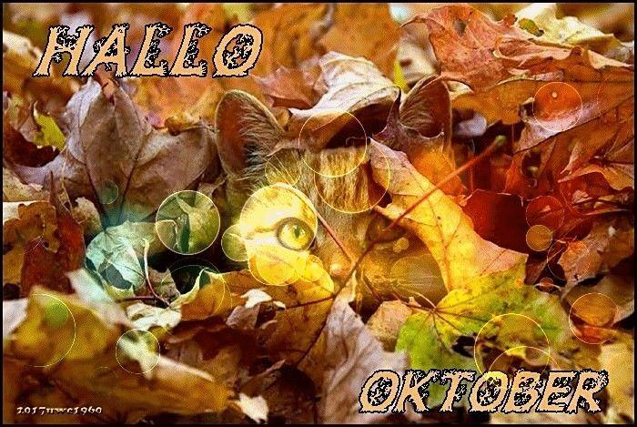 pin von viola schöneck ehemals hauf auf oktober  hallo