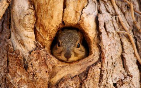Squirrel - animal, squirrel, wood, tree, cute