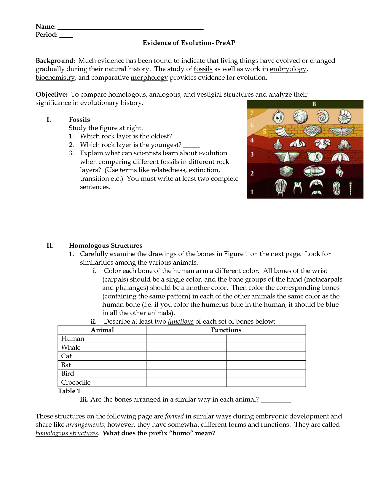 Evidence For Evolution Worksheets