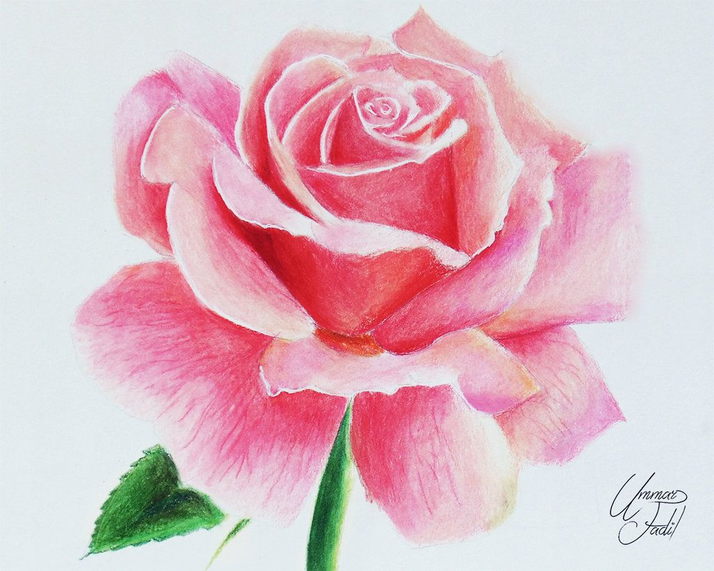 Drawing Flowers 1 A Rose. by on