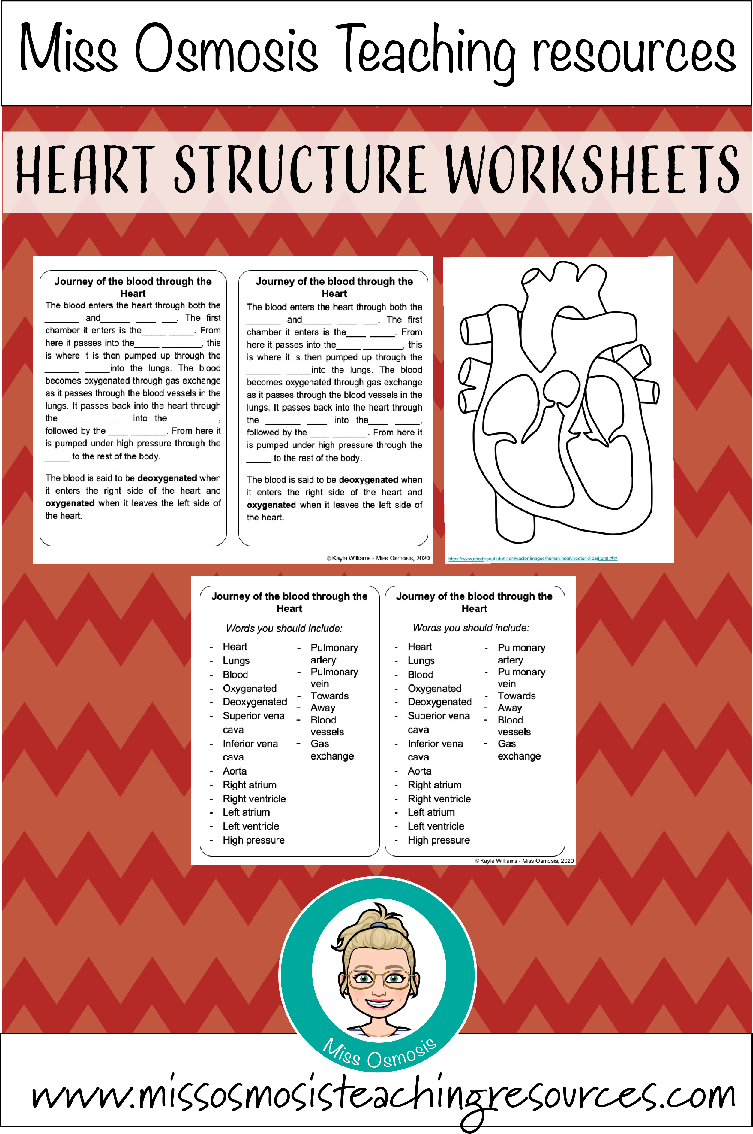 Heart Structure Student Worksheets