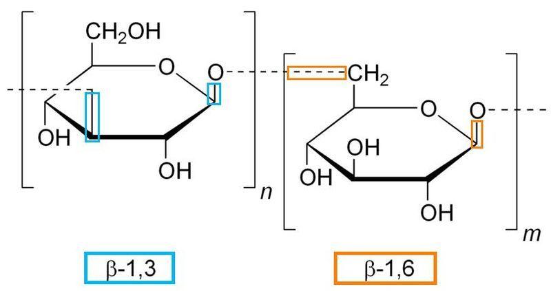 Beta Glucan Molecule B_1,3 B-1,6