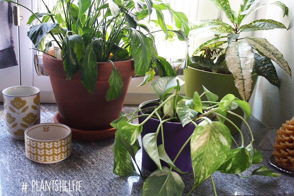 Urban Jungle Bloggers: Plantshelfie 2 by @crisvintage