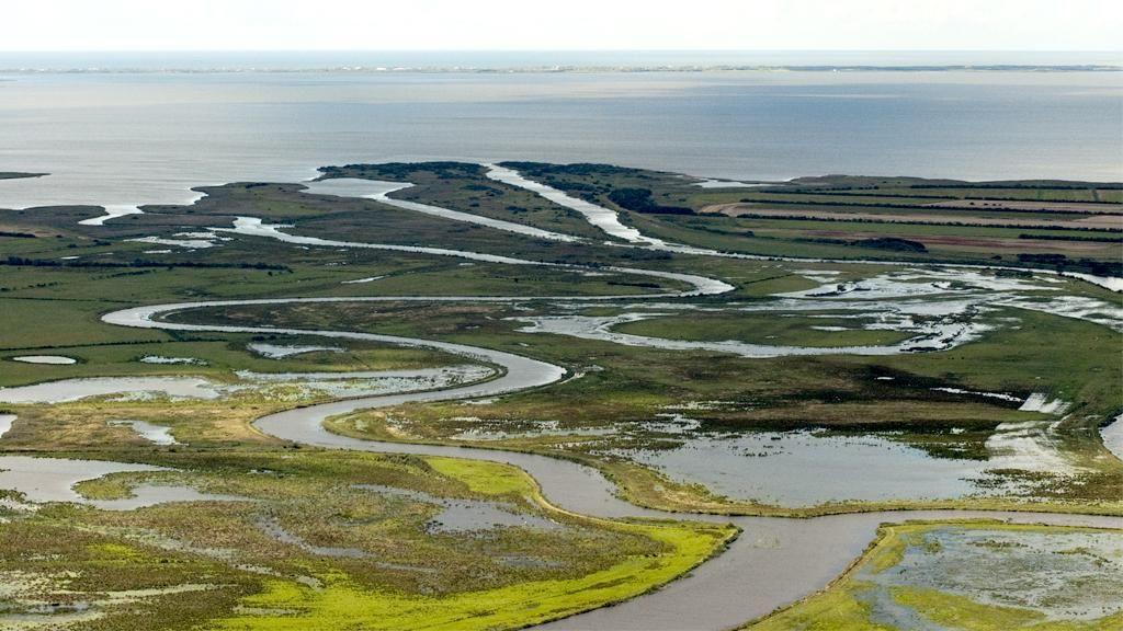 Floddelta i Skjern Enge