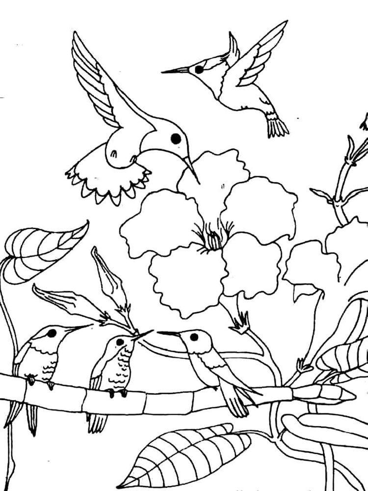 Hummingbird Coloring Pages Printable Printable Coloring Pages To Print Animal Coloring Pages Coloring Pages Bird Coloring Pages