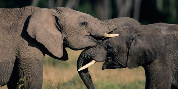 Theresa May  Honour The Conservative Pledge To End The Uk Ivory