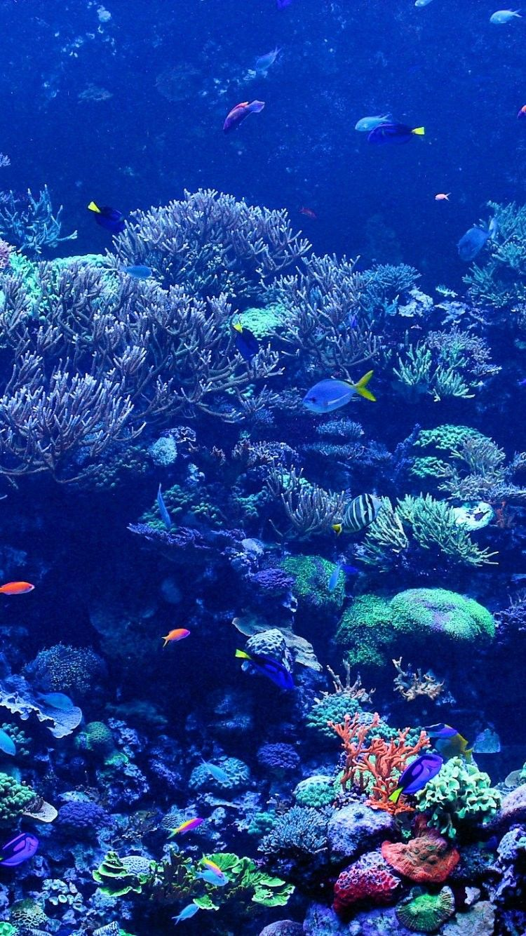Coral Reef Pictures iPhone 6 Wallpaper 25137 Underwater