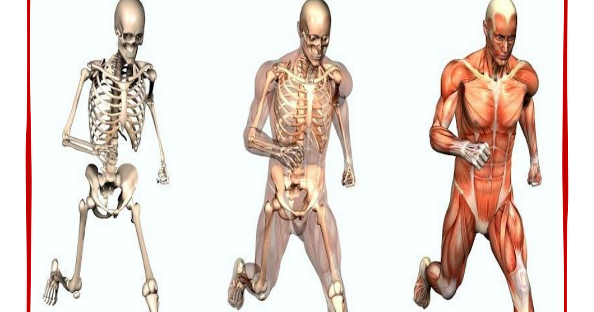 Human Body Notebooking Pagespdf Anatomy Pinterest