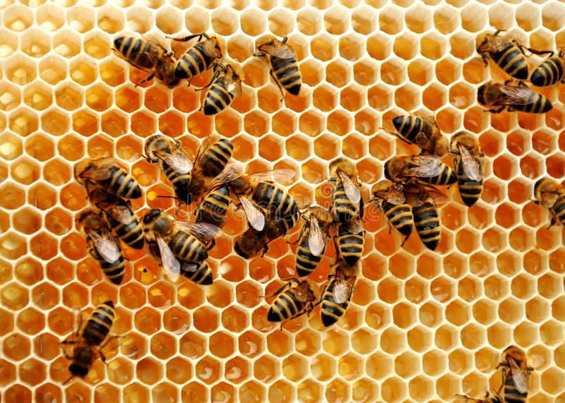 Localbitcoins apiary live betting strategy forum