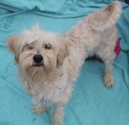 Adopt Mayflower On Spaniel Dog Dogs Adoption