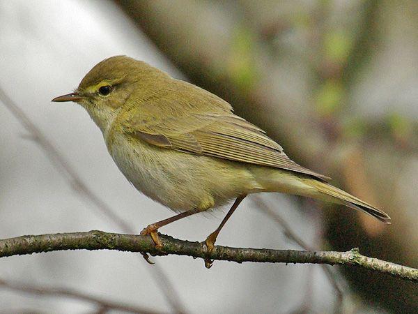 Pin Op Vogels Birds