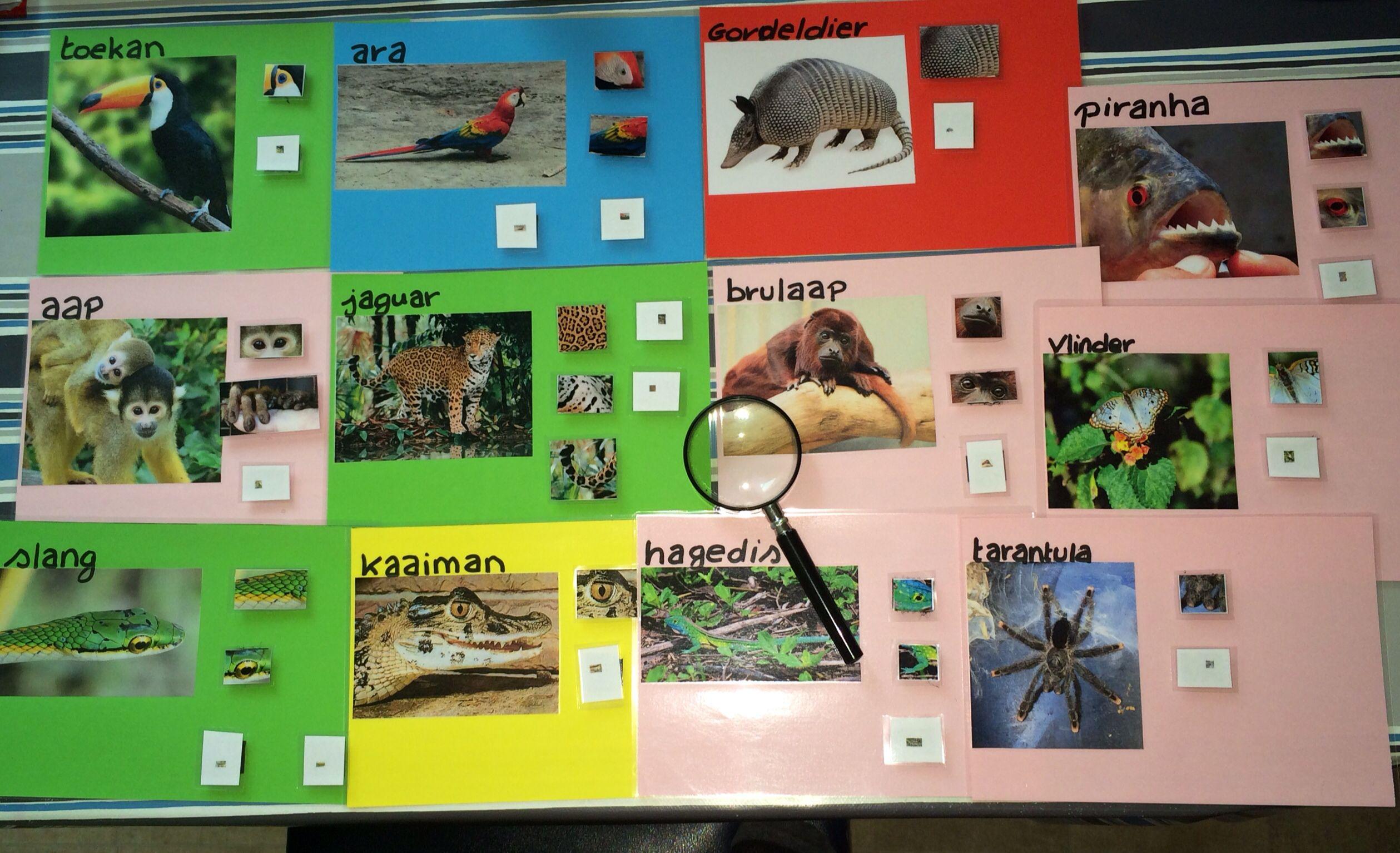 Pin Van Eline Hautekeete Op Thema Suriname Dieren Zoogdieren Thema