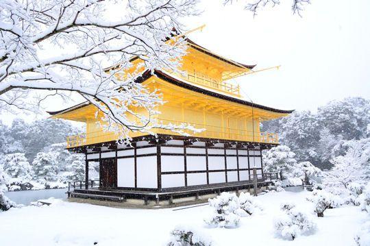 La neige déposée sur les arbres du jardin du Temple du Pavillon d'or 金閣寺 à Kyoto lui confère un peu de poésie qui n'est pas sans rappeler la légèreté des fleurs de cerisiers au printemps.