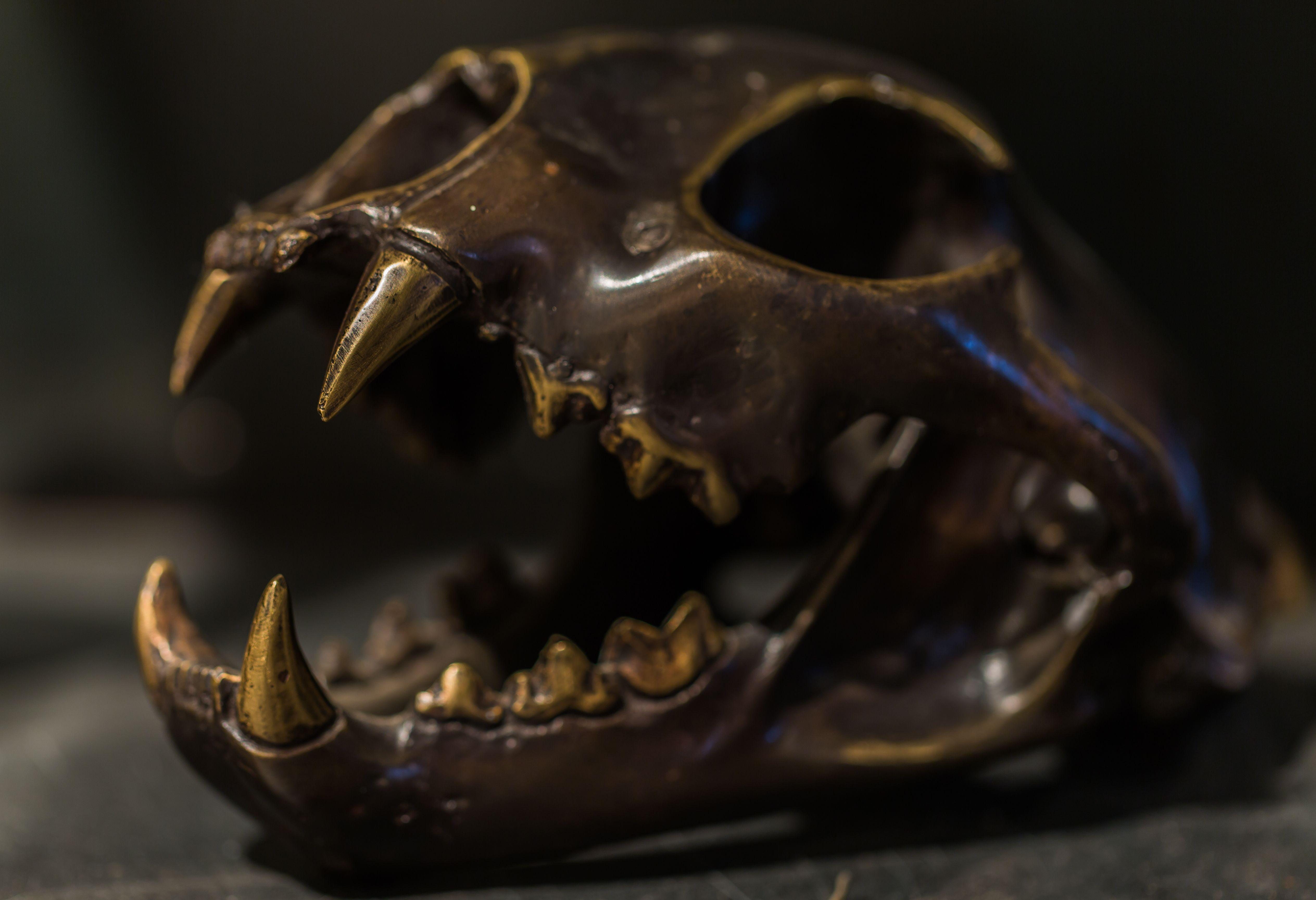 Bronze Mountain Lion Skull  Artefact Design & Salvage | A