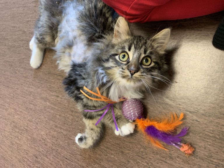 Laura Sawosko Serenades Us Home Door County Today In 2020 Pet Hacks Cats Cat Safe