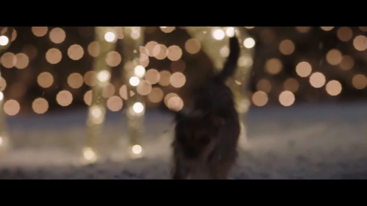 ▷ Meijer Christmas Commercial - Lily Ad Commercial on TV 2018 ...