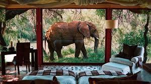 Image result for africa safari resort