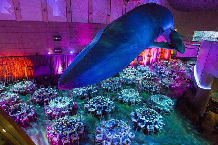 Long Beach Weddings Aquarium Of The Pacific