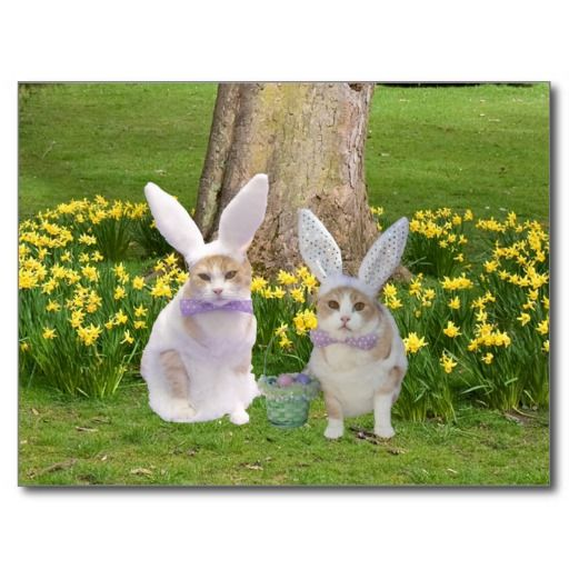 Cute, Funny Bunny Cats Postcard