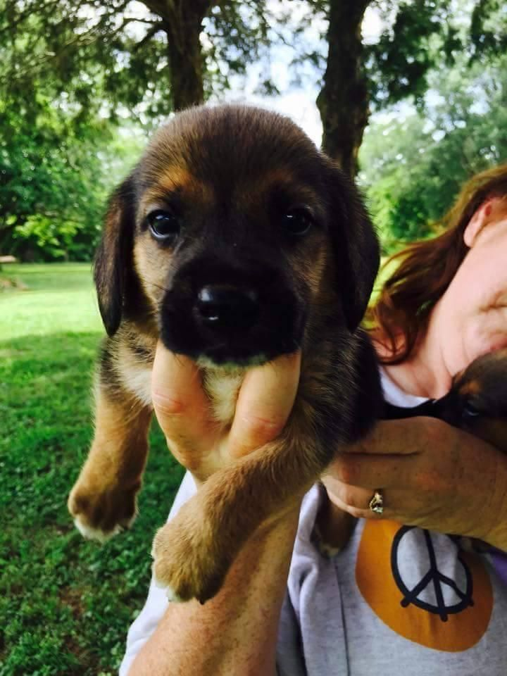 Meet Brynn Smyrna Ny A Petfinder Adoptable Beagle Dog