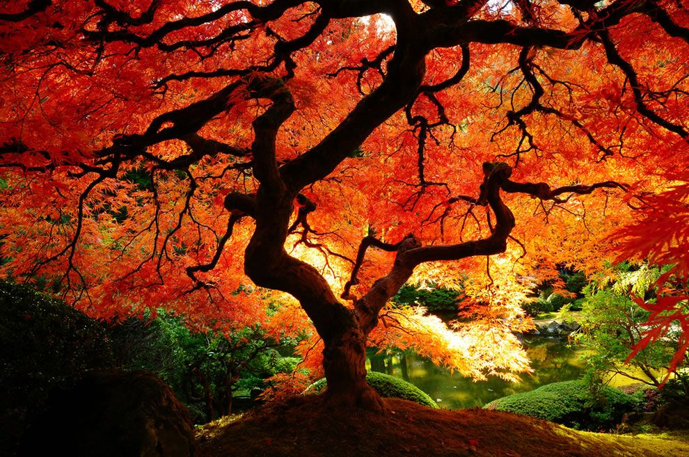 Orange Is Beautiful Interesting And Is The Happiest Color