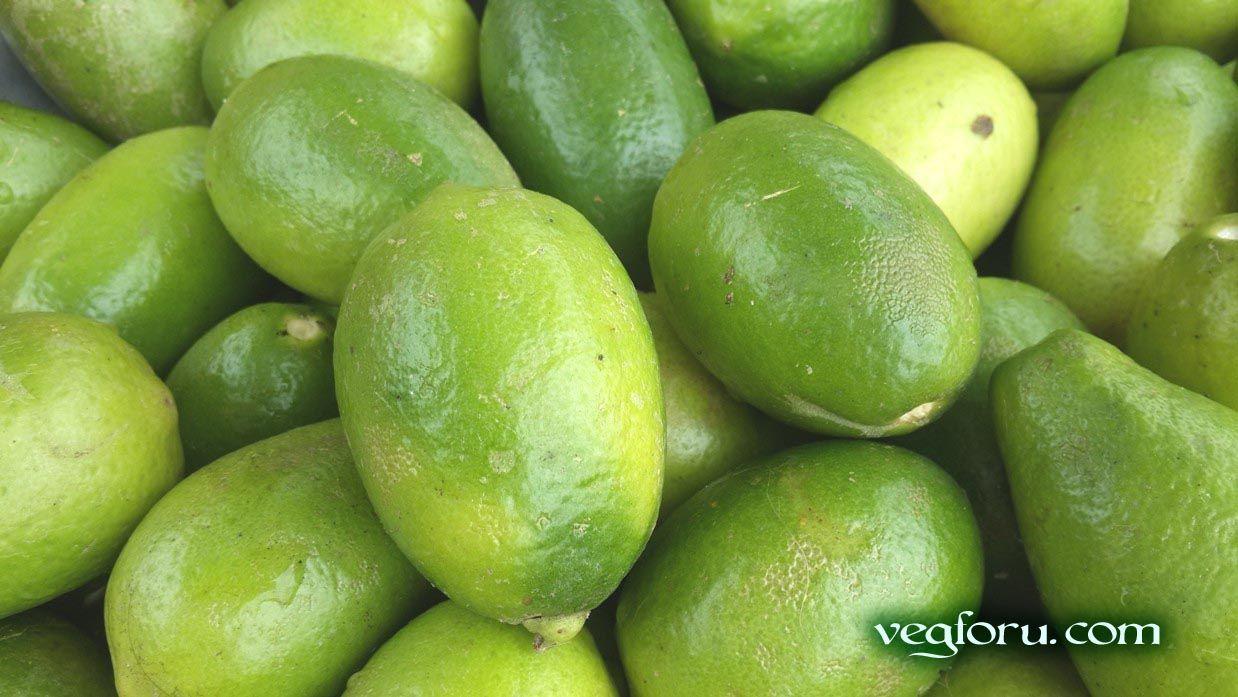 Vegetable importer can contact to info@vegforu com for Lemon