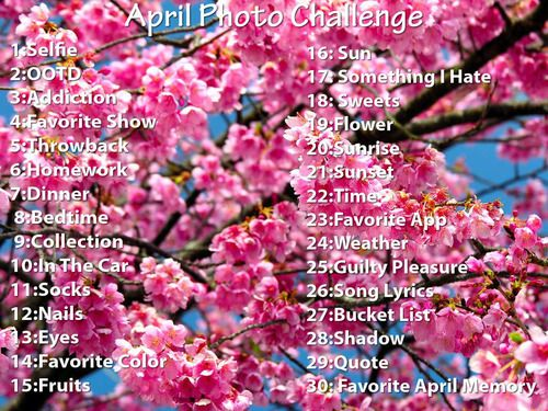 Photo Challenge Blossom Trees Cherry Flower Cherry Blossom Images
