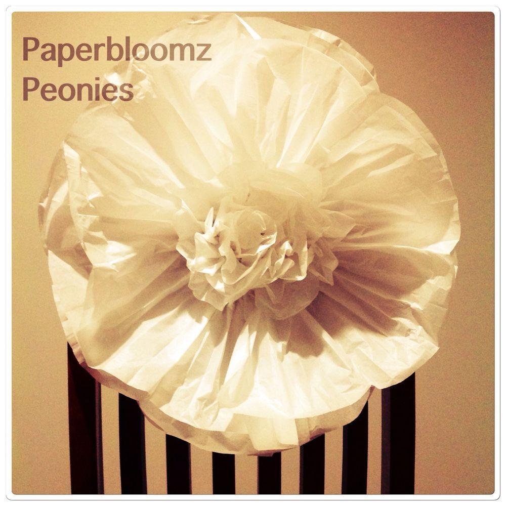 Paperbloomz large vanilla paper peonies x 5 bulk tissue paper paperbloomz large vanilla paper peonies x 5 bulk tissue paper flowers wall decor mightylinksfo
