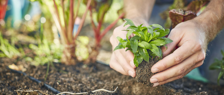 Les 11 légumes à planter dans son potager au printemps