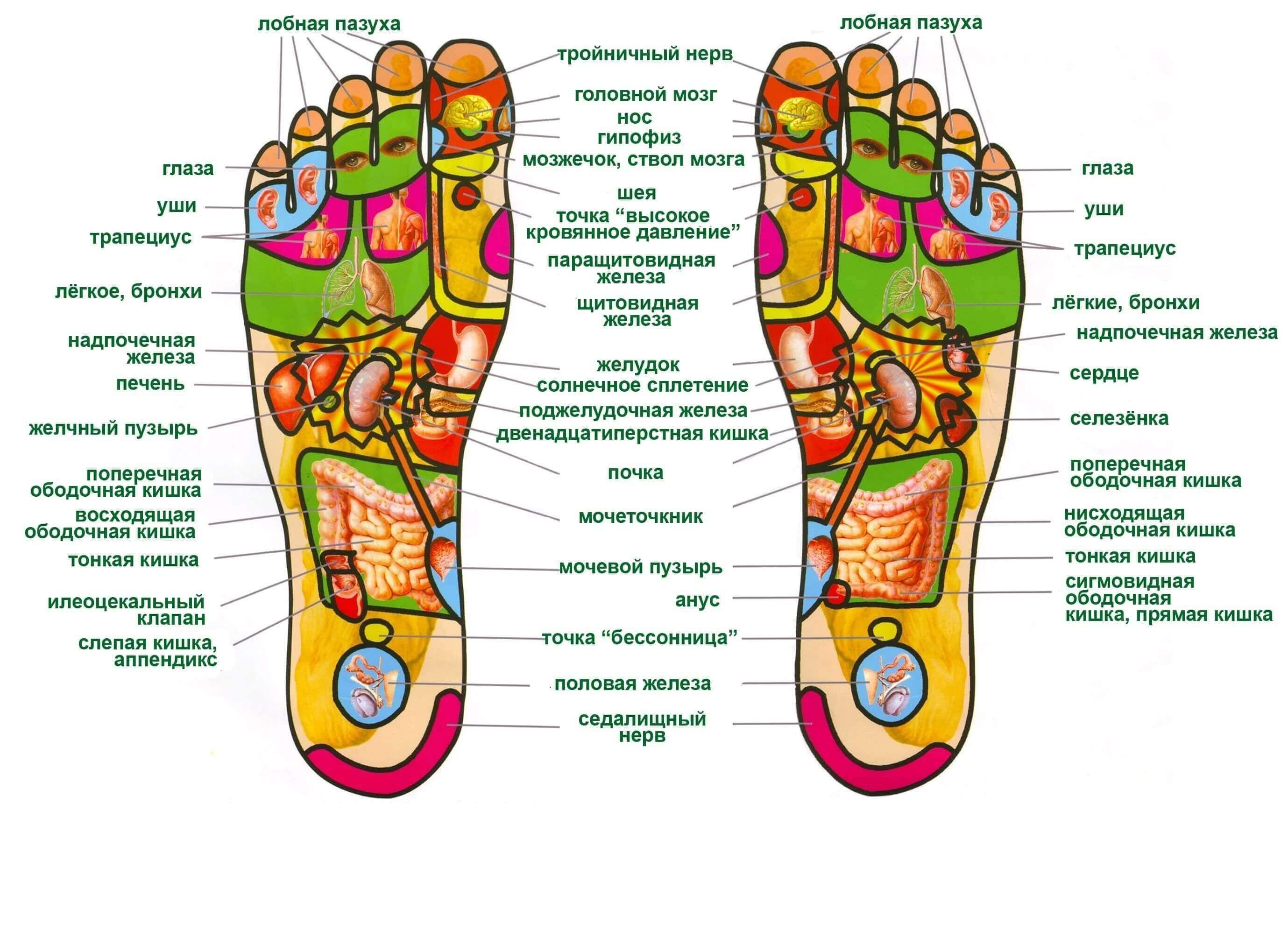 Схема массажа стоп ног фото 859