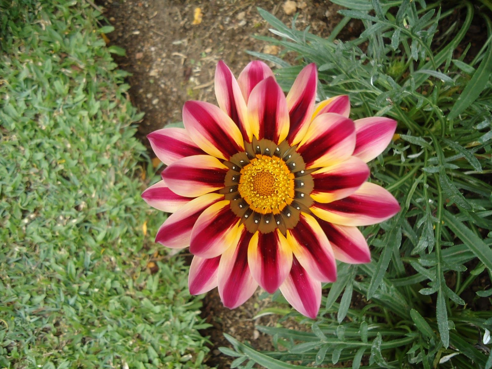 Nuwara Eliya Sri Lanka Flowers In Nuwara Eliya Nuwara Eliya Shade Garden Flowers