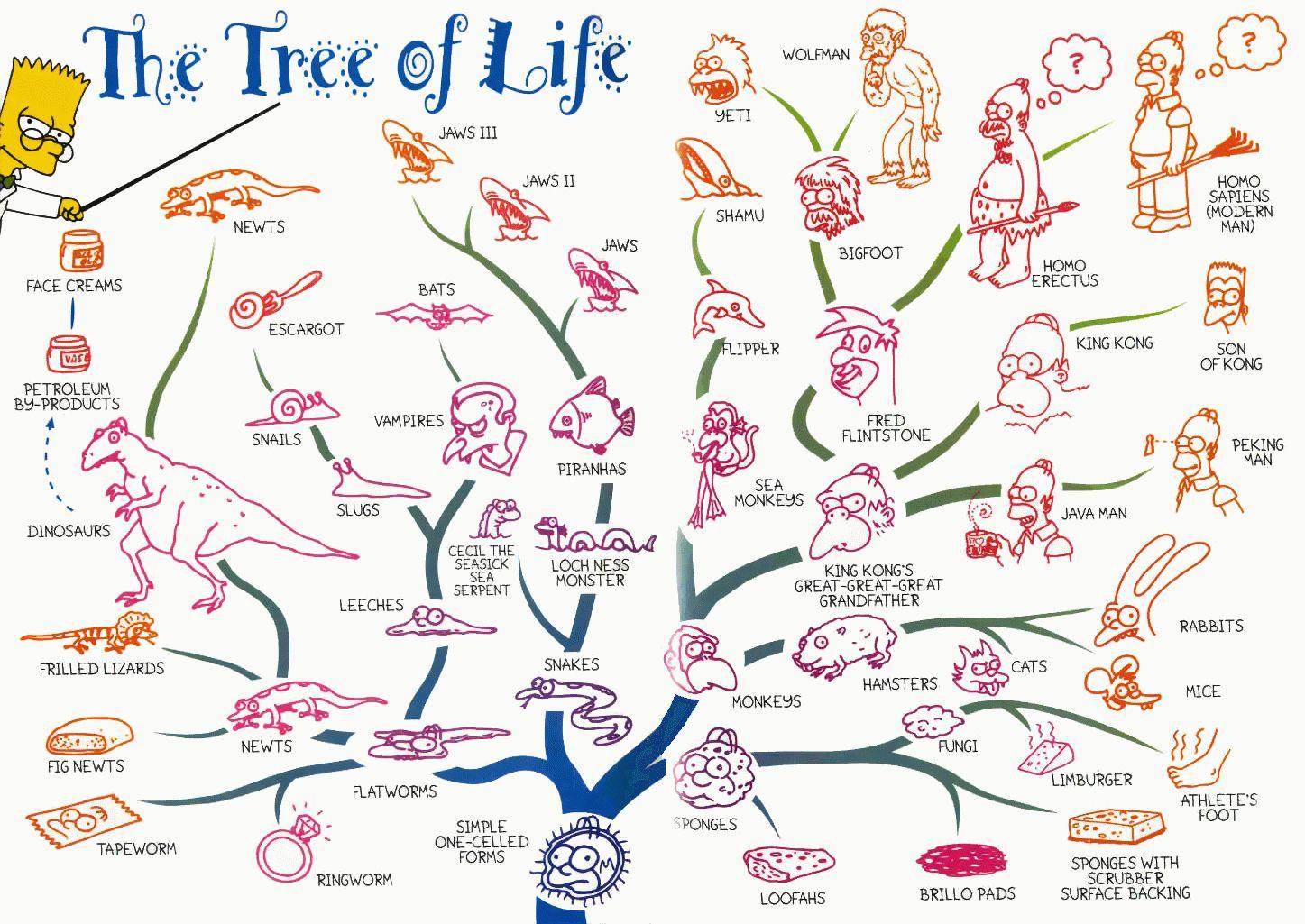 Tree Of Life Evolution Of Life According To Bart Simpson Lol