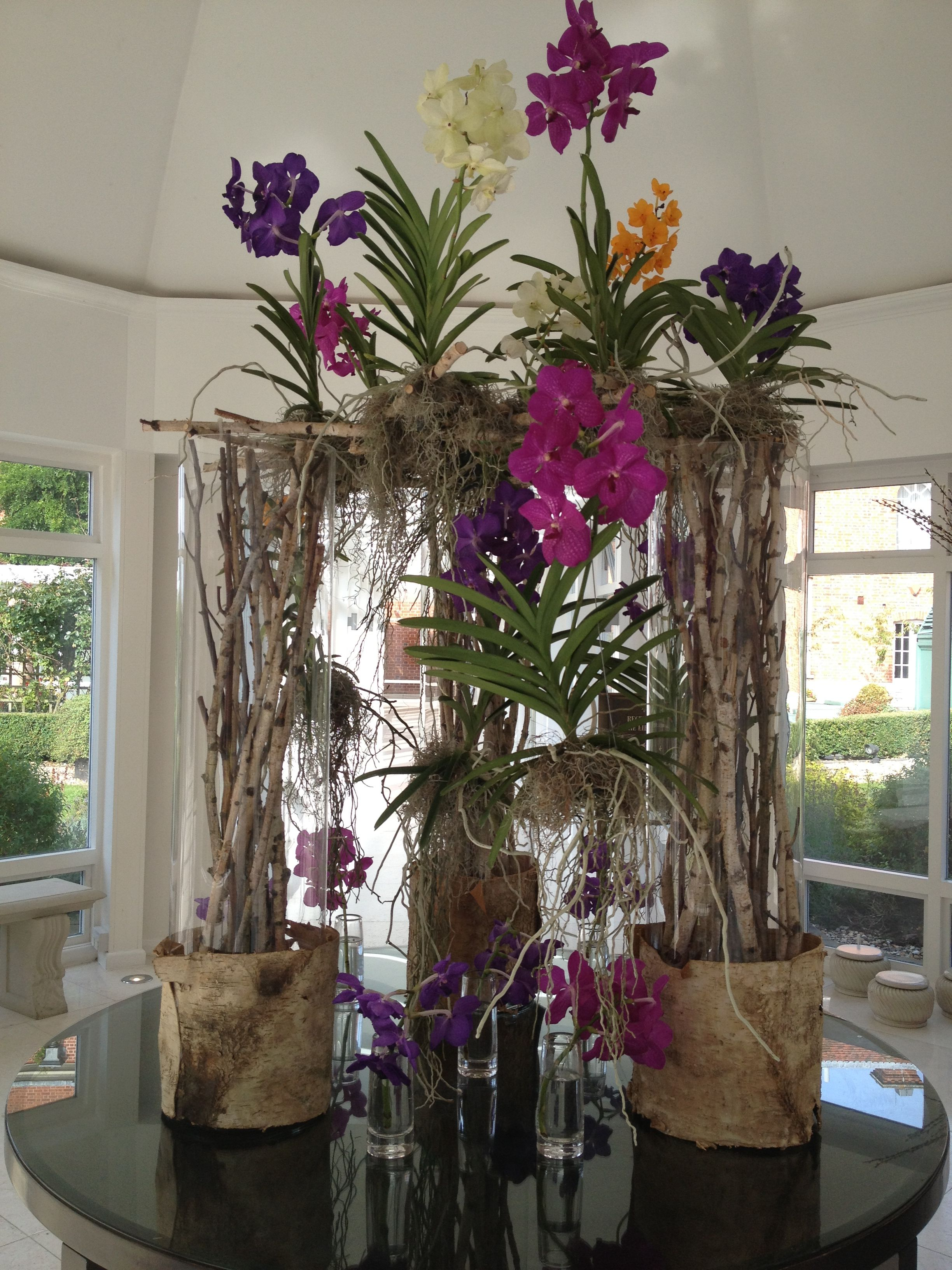 A Beautiful Orchid Display In The Glass Link Courtesy Of