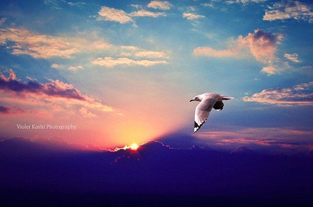 """""""Faith is the bird that feels the light when the dawn is still dark."""" by Violet Kashi, via Flickr"""