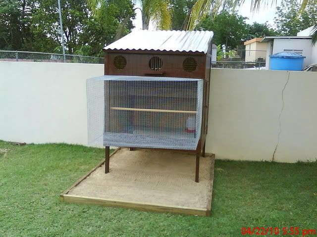 Introductory loft challenge pigeon talk garden ideas for Pigeon coop ideas