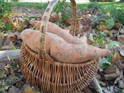 Home Joys: Grow, Eat, Enjoy - Sweet Potatoes